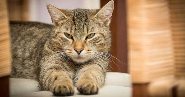 Cat devastated after customs officers destroy his dream of retiring to Spain